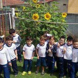 Cultivo de girassóis pela Educação Infantil