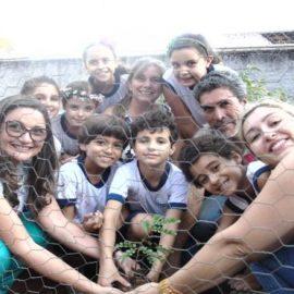 Plantio do Pau-Brasil