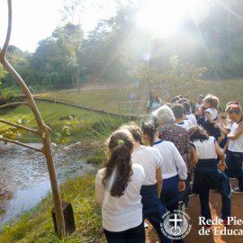 Banho de Floresta II – conscientizar é preciso!