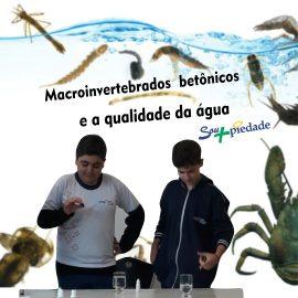 Macroinvertebrados betônicos e a qualidade da água
